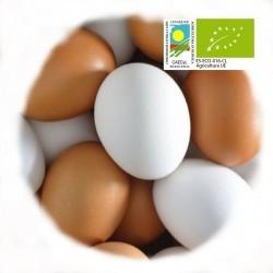 Huevos ecológicos docena